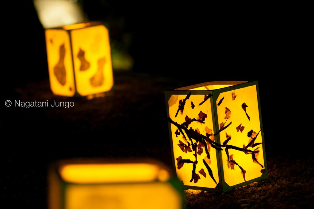 武家屋敷の行燈(松江水燈路2015)