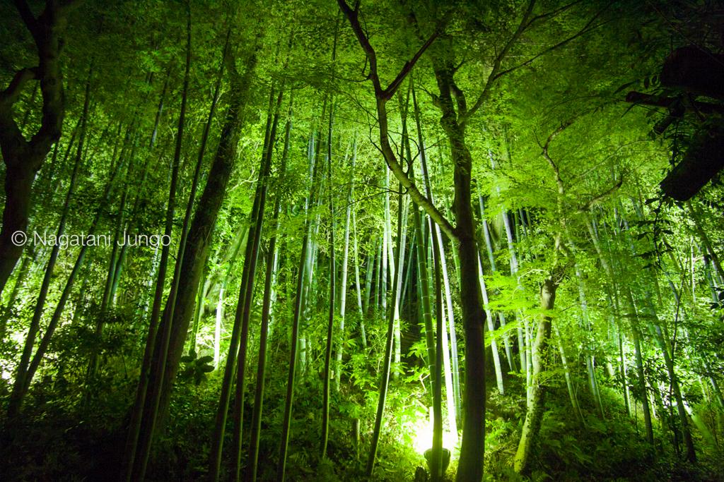 武家屋敷の行燈 (松江水燈路 2015)