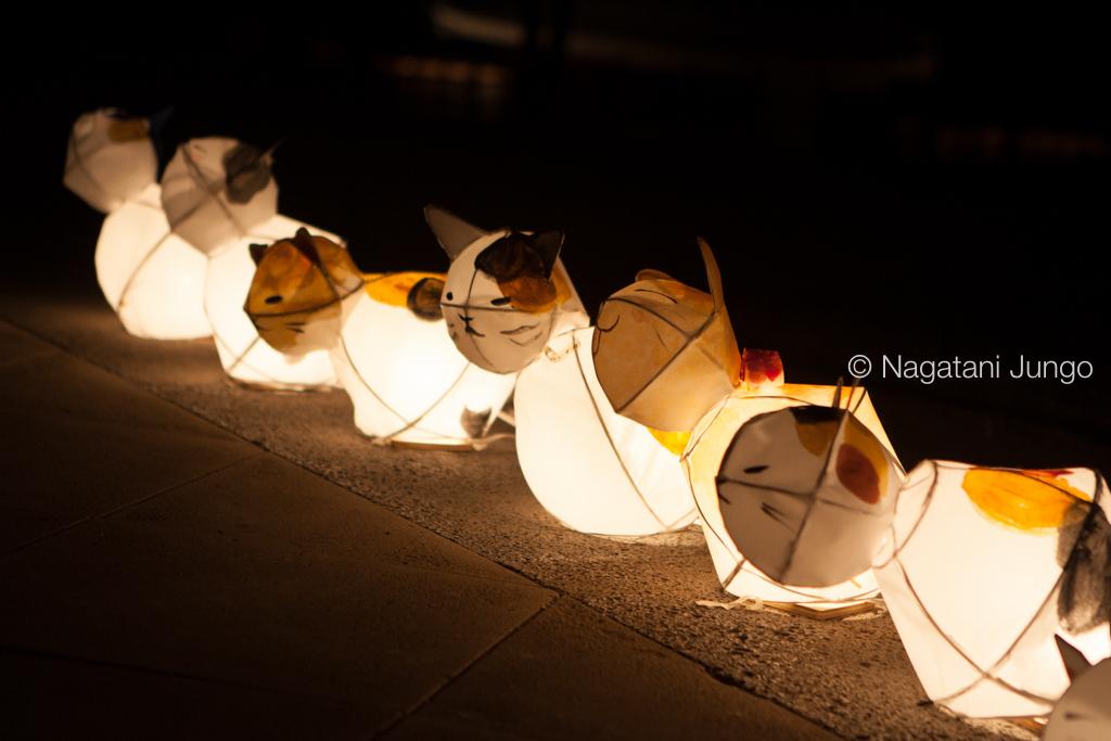 興雲閣前に並べられた猫の行燈。